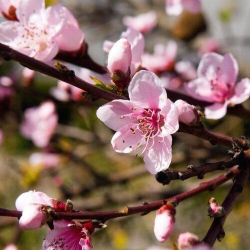 每天一杯大冰奶,桃花就會圓滿
