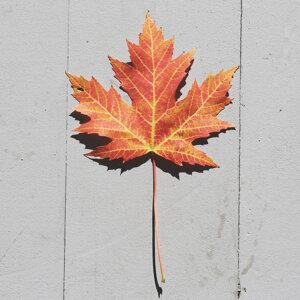 今個秋天,我們相約一起執葉