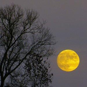 那年古典花開月正圓