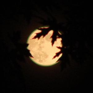 月過時代唱情歌