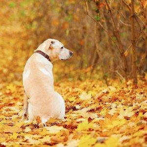 感性之秋,空氣中飄散淡淡的哀傷