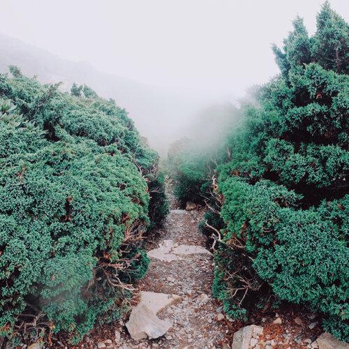 漫步山林,跟自己說說話!