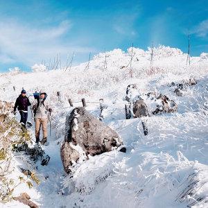 冬日山林,活力滿滿!