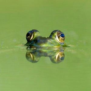 我的蛙,怎麼你就不回來了
