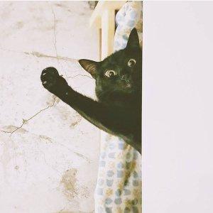 222 貓之日ω 不只獻上罐罐還要歌頌貓主子!