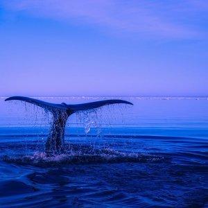 一探水底游 美麗永遠驚奇不已