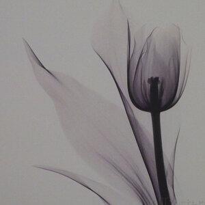 Tulip 精選