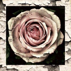 誰說只能有愛,聽我可歌可泣的心碎 #情人節