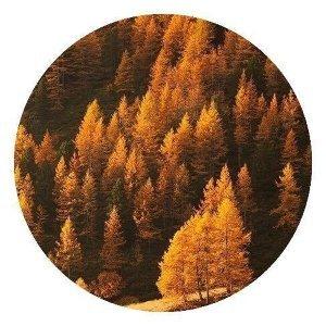 秋天JAZZ:數樹深紅出淺黃