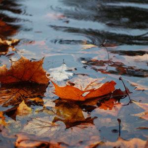 東北季風來了,聽雨聲吧!