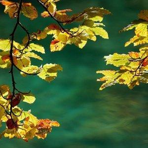 人生短短幾個秋呀~輕聽古典