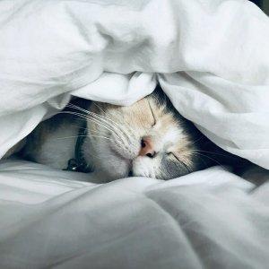 一個人的假期 只想慵懶地癱在家