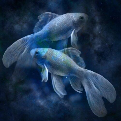 星座系列雙魚座:溫和卻澎湃,幻想豐富的感情忠誠者