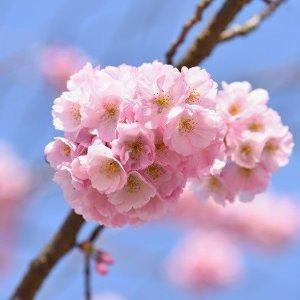 春絢麗賞花趣