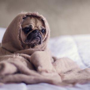 只想继续赖床....