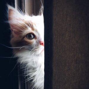 貓奴來報到!