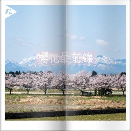 【賞櫻必聽】期間限定,春季追櫻20首JPOP歌曲