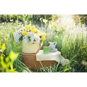 夏日午後 享受慵懶野餐時光