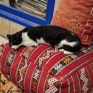 慵懶日常,沙發好眠歌單