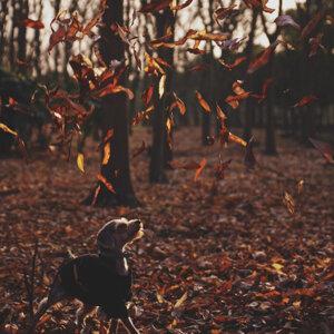 像這樣的悲秋🍁