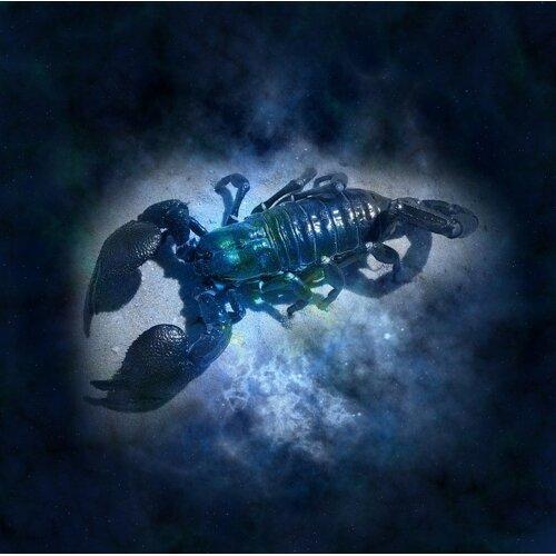 星座系列天蠍座:盤算一切可能,壁壘分明的愛與恨