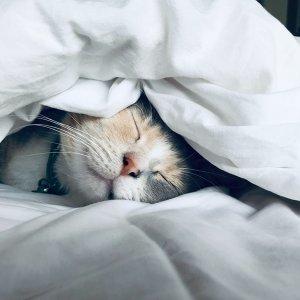 準備進入冬眠的季節