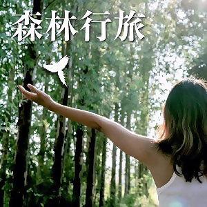 森林行旅 Forest Trip- 鳥鳴音樂芬多精