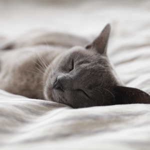 你的Chill懶人包☁️ (不定期更新)#睡前聽 #放鬆