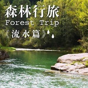 森林行旅 Forest Trip -水流音樂心舒暢