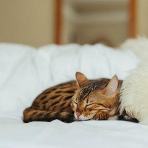 深度睡眠💋Song For Sleeping