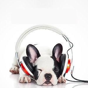 Relaxing Songs for Pets