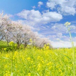 春神來了!讓你如沐春風的那些歌