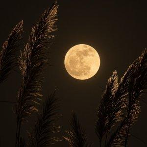 和你私奔到月球🌙 30首和「月亮」有關的歌