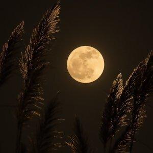 Moon Tunes 和你私奔到月球🌙  和「月亮」有关的歌