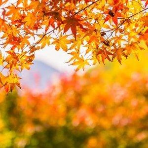 天涼好個秋,秋意氛圍Jpop歌曲