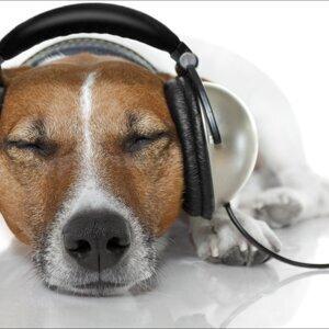 ♥ 上班就該聽音樂♥ (10/27更新)