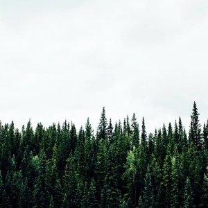 森林漂遊音樂祭歌單