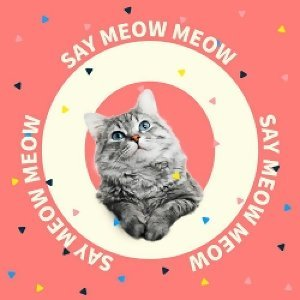 CELINE, Cloud Wang - Say Meow Meow