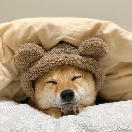 睡吧!讓被窩擁抱你🌜