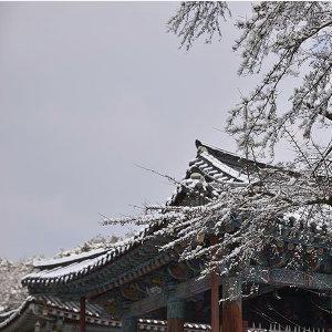 寒風中の韓歌☃️