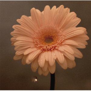 花は咲く!3.11 東北応援ソング
