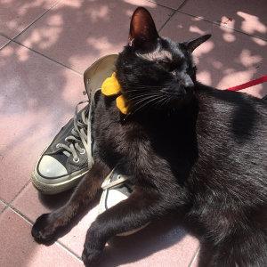 臭貓曬太陽