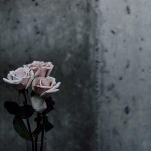 大人系情歌,宣洩無處安放的淚與悲。
