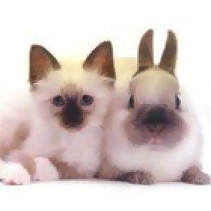 咪兔情歌對唱