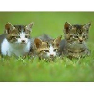 小齊-陪伴的貓
