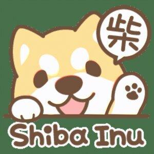柴柴聼你說 - Shiba heard you say