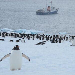 【環遊世界旅行、心靈書 《倆倆》有聲明信片特集】EP01- 南極 德瑞克海峽有多波濤洶湧 ? 企鵝高速公路到底是什麼 !?