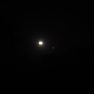 舊寮瀑布月光螢火蟲黃嘴角鴞