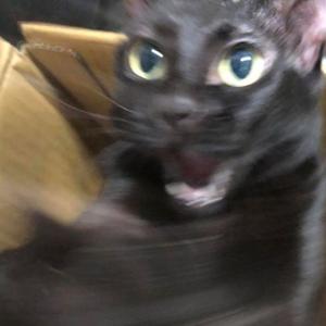 黑貓直播ep04:馬六貓的故事完整版 + 黑狗老師部落客經營法 ~ (´・ω・`)