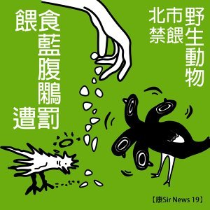 【康Sir News 19】 北市禁餵野生動物×餵食藍腹鷴遭罰
